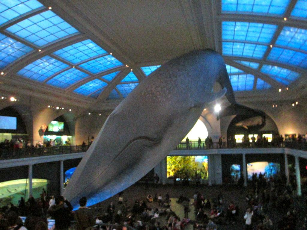 baleia nova york e voce