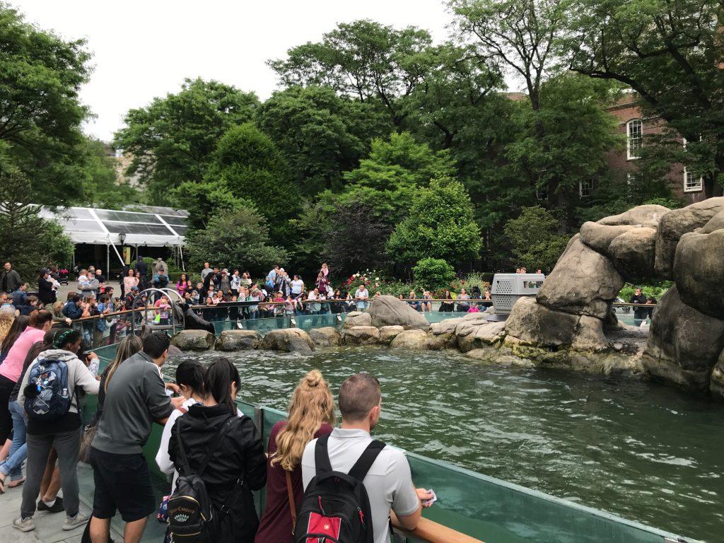 zoológico no Central Park